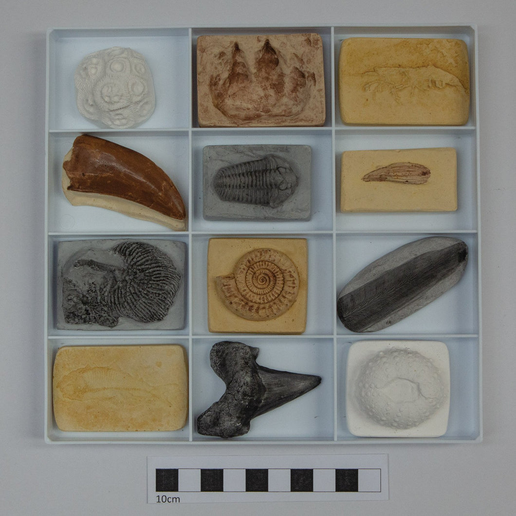 An Introduction to Fossils - Online Course January 2021