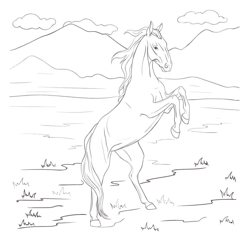 Horse Cartoon Drawing