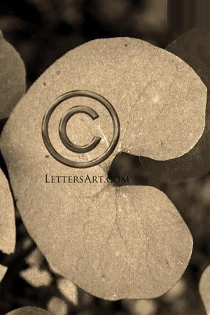 Letter Art Name Art Letter C Letter Art Printable Art Alphabet Photo Instant Download Letter C - C13