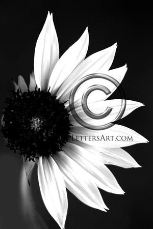 Letter Art Name Art Letter D Letter Art Printable Art Alphabet Photo Instant Download Letter D - D11