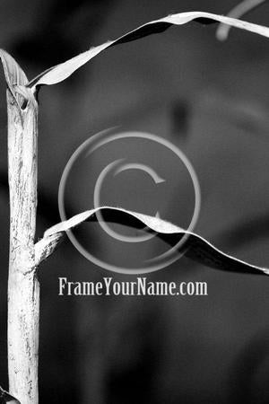 Letter Art Name Art Letter F Letter Art Printable Art Alphabet Photo Instant Download Letter F - F06