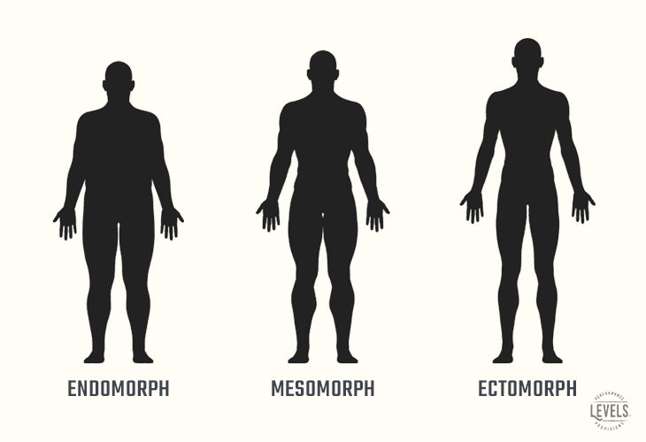 Are You a Mesomorph, Ectomorph, or Endomorph?