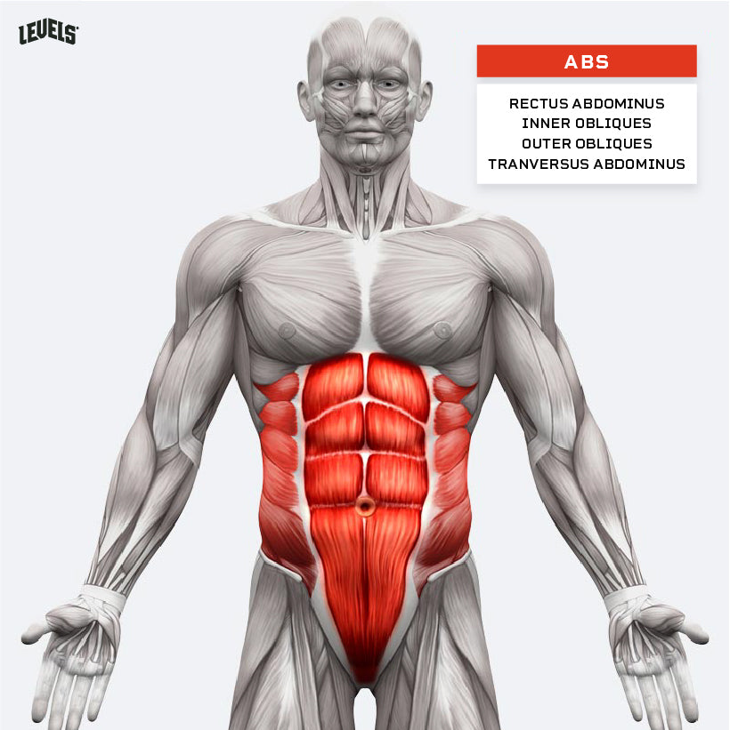 Muscle Groups - Abs