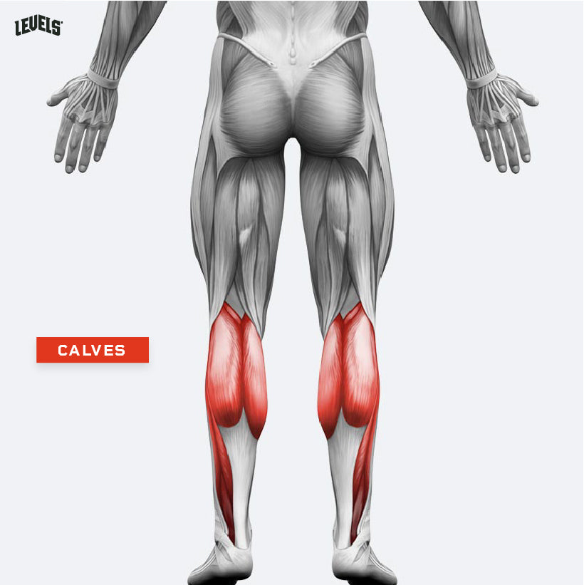 Muscle Groups - Calves