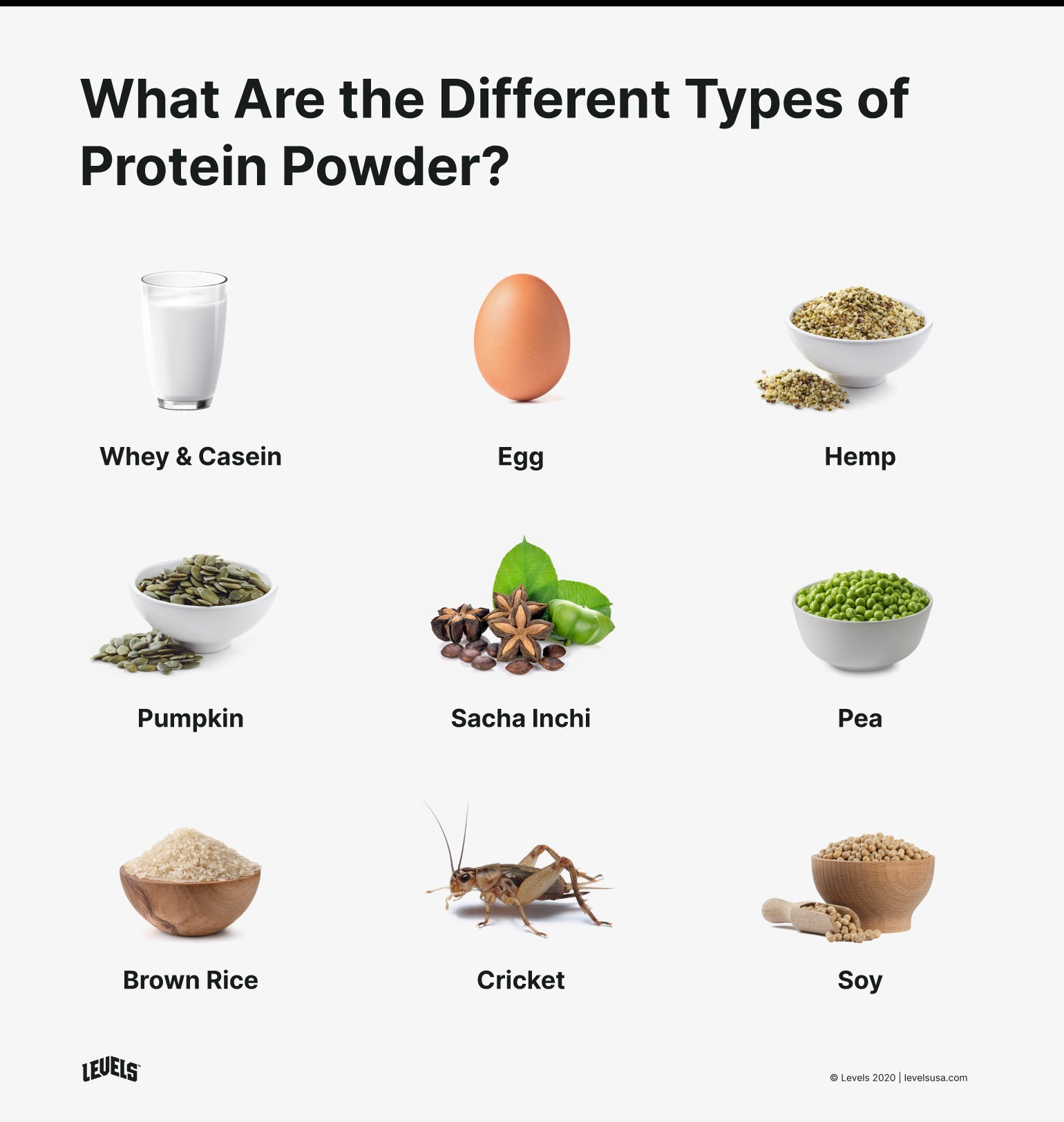 Types of Protein Powders - Infographic