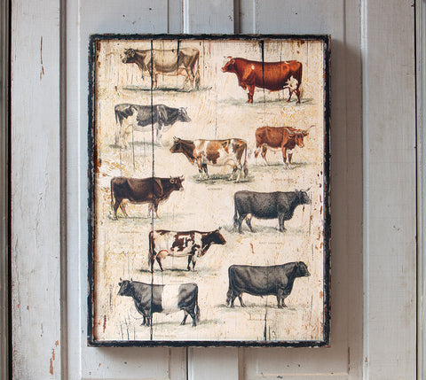 Vintage Cow Breeds