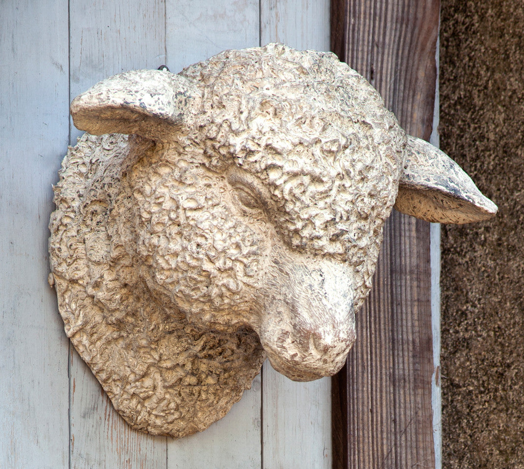 Sheep Head