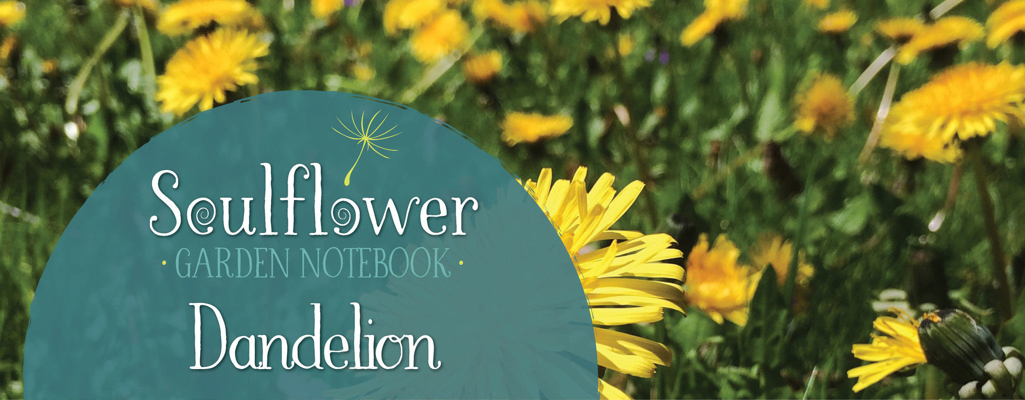 Conversation with Dandelion: The Great Detoxifier!