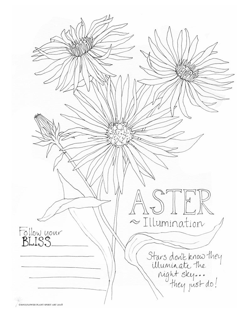 Aster (Illumination) Coloring Page
