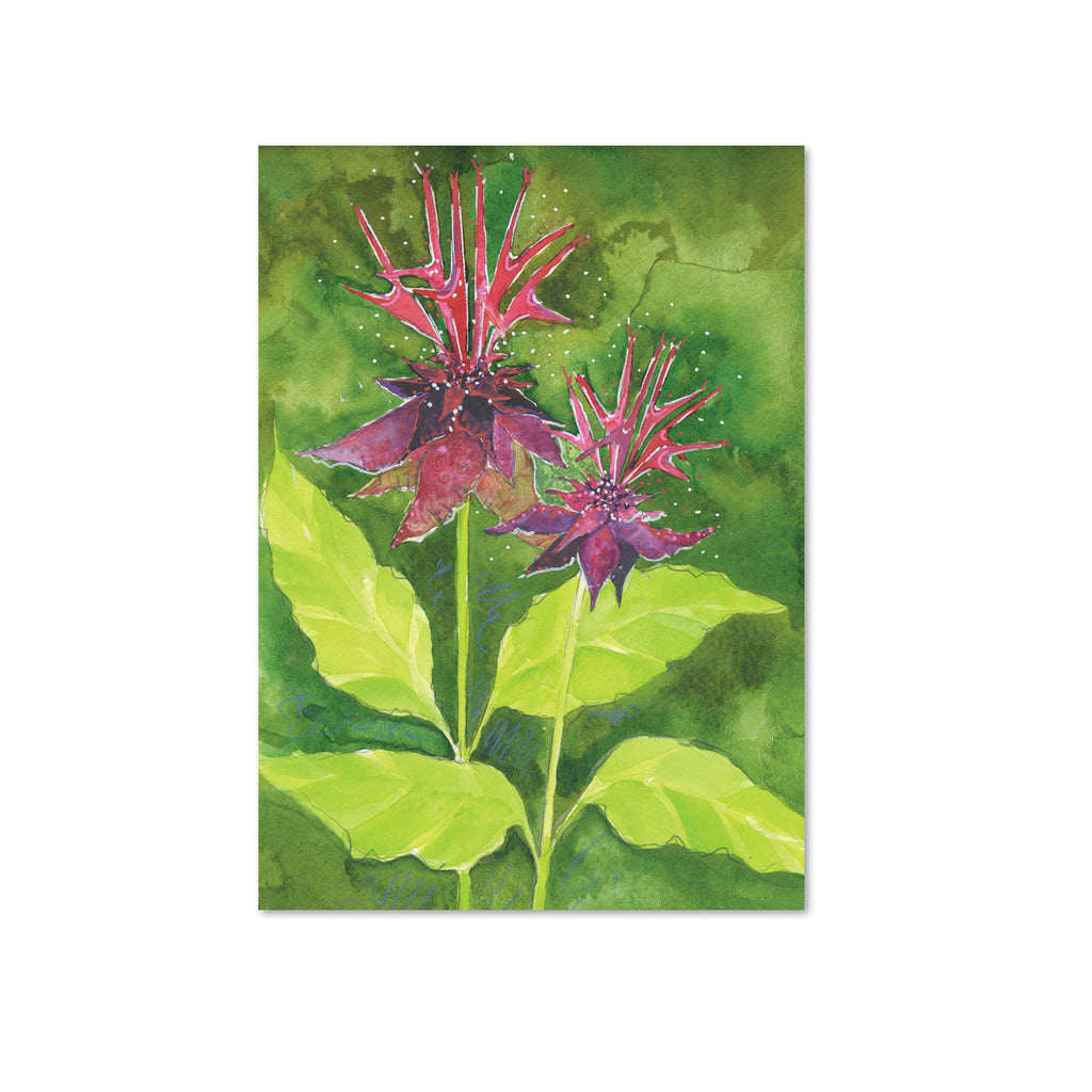 Bee Balm (Vibrance) Original Painting