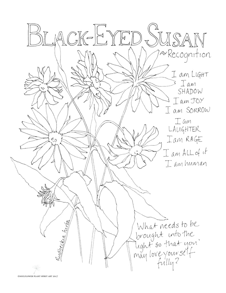 Black-Eyed Susan (Recognition) Coloring Page