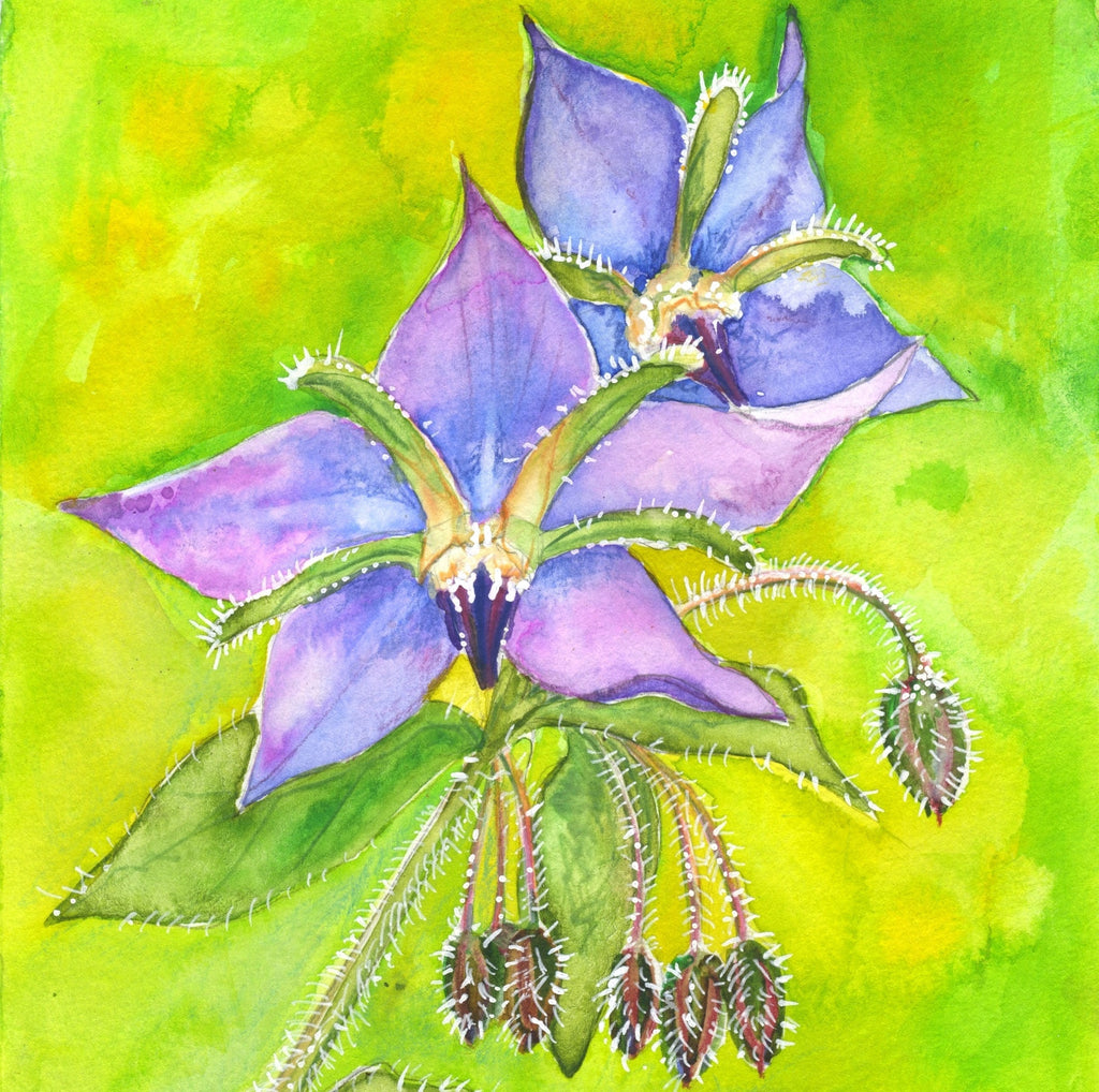 Borage (Optimism) Mounted Print
