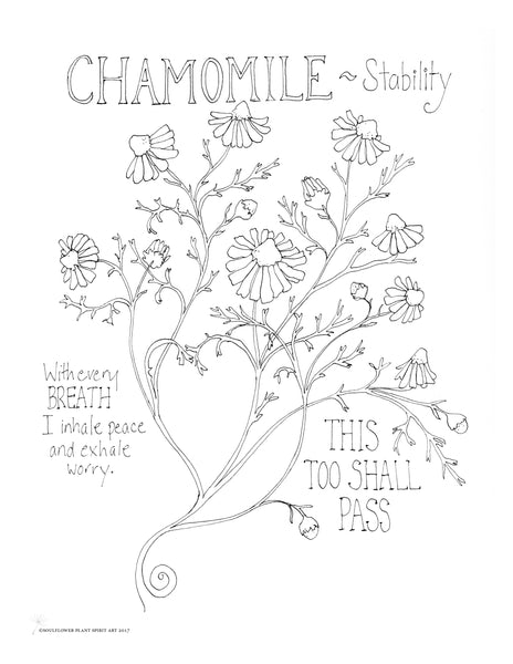 Chamomile (Stability) Coloring Page