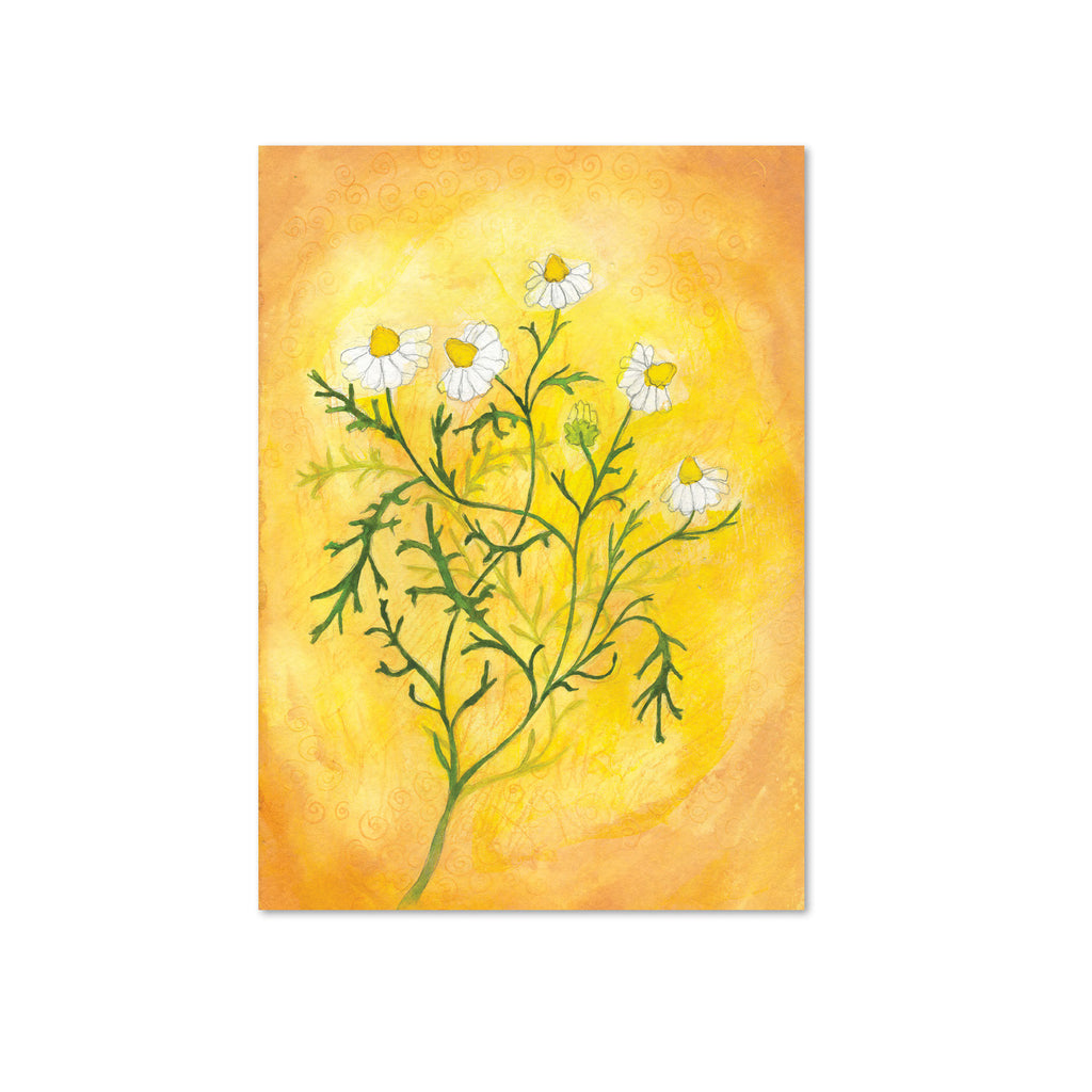 Chamomile (Stability) Original Painting