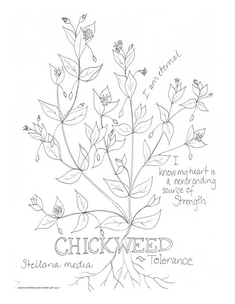 Chickweed (Tolerance) Coloring Page
