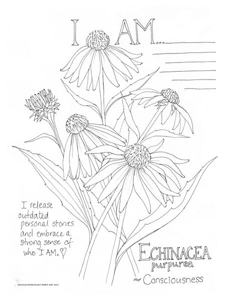 Line Drawing Coneflower : Echinacea consciousness coloring page my soulflower
