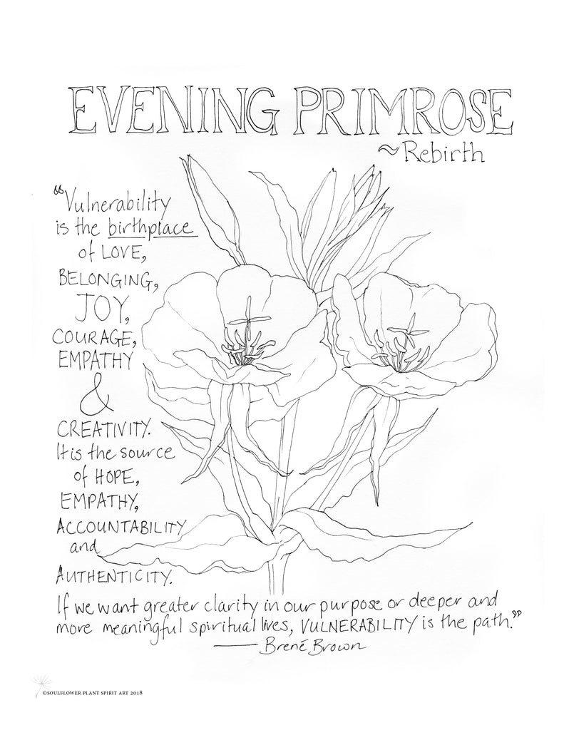 Evening Primrose (Rebirth) Coloring Page