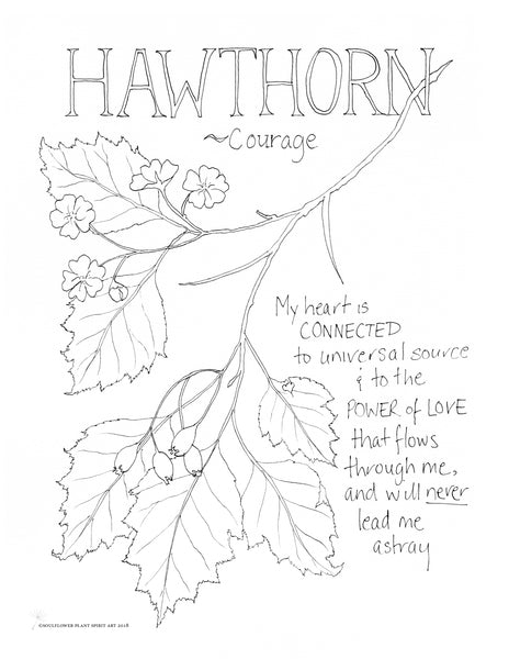 Hawthorn (Courage) Coloring Page