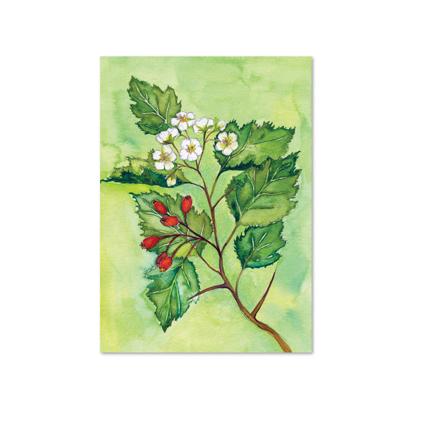 Hawthorn (Courage) Original Painting