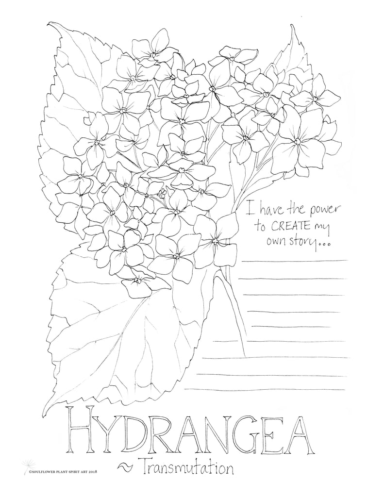 Hydrangea (Transmutation) Coloring Page
