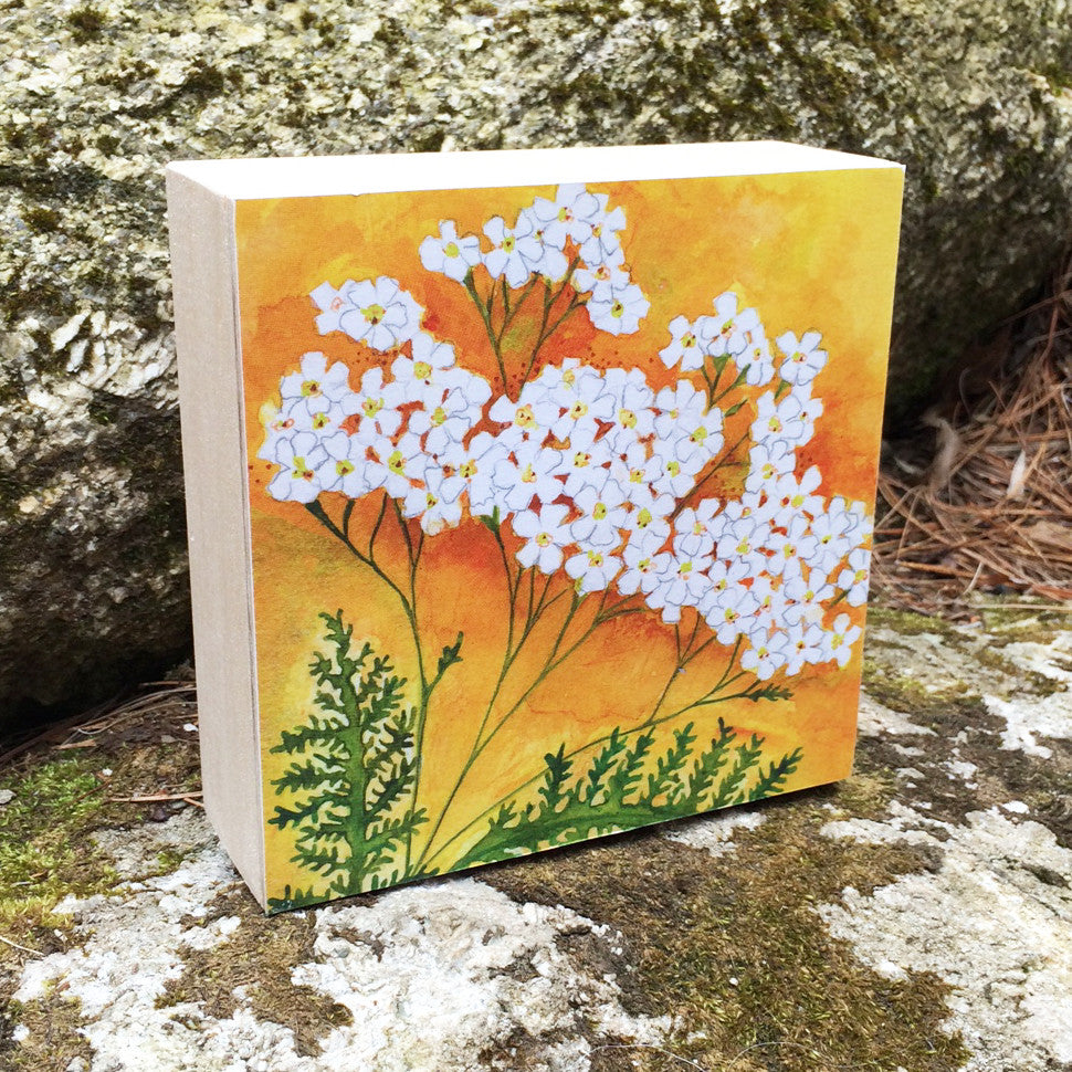 Yarrow Mounted Print
