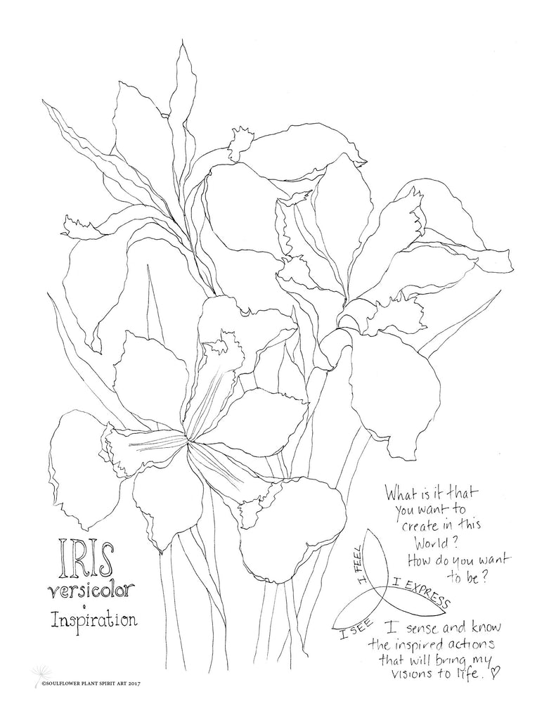 Iris (Inspiration) Coloring Page