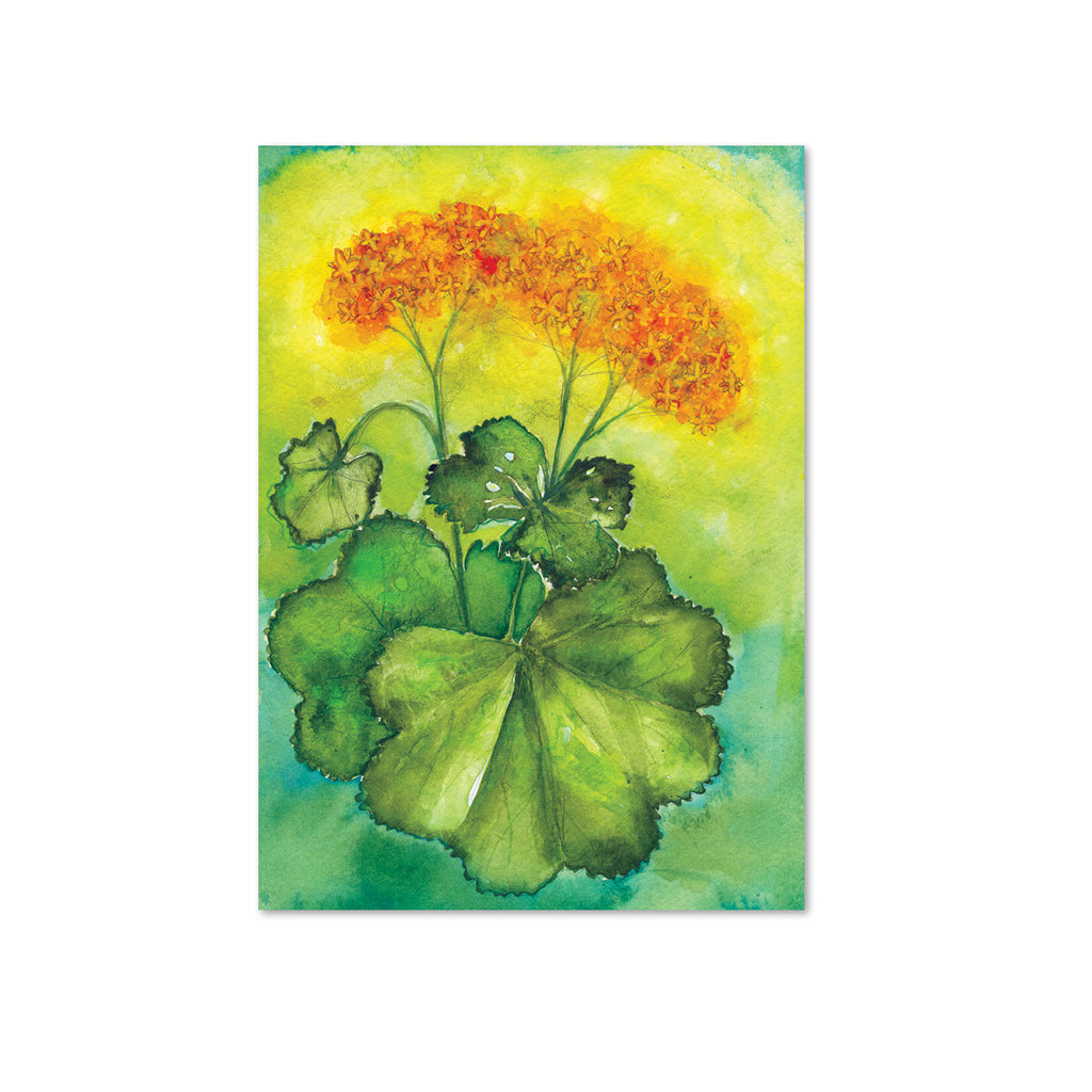 Lady's Mantle (Nurturance) Original Painting