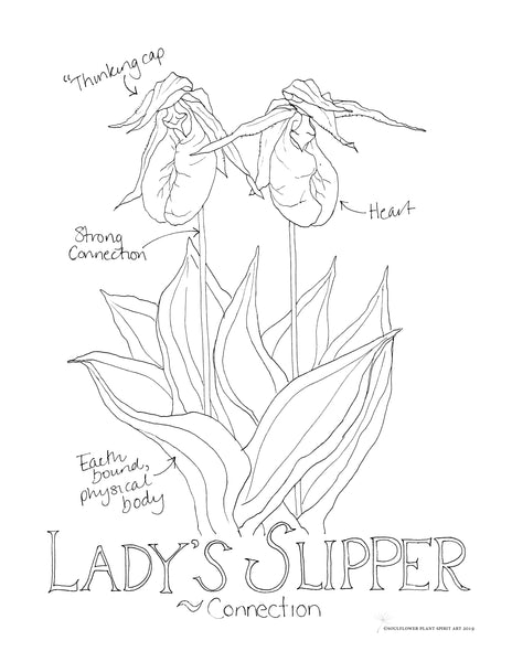 Lady's Slipper (Connection) Coloring Page