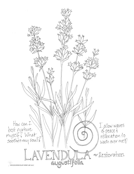 Lavender Coloring Page