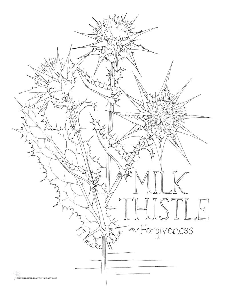 Milk Thistle (Forgiveness) Coloring Page