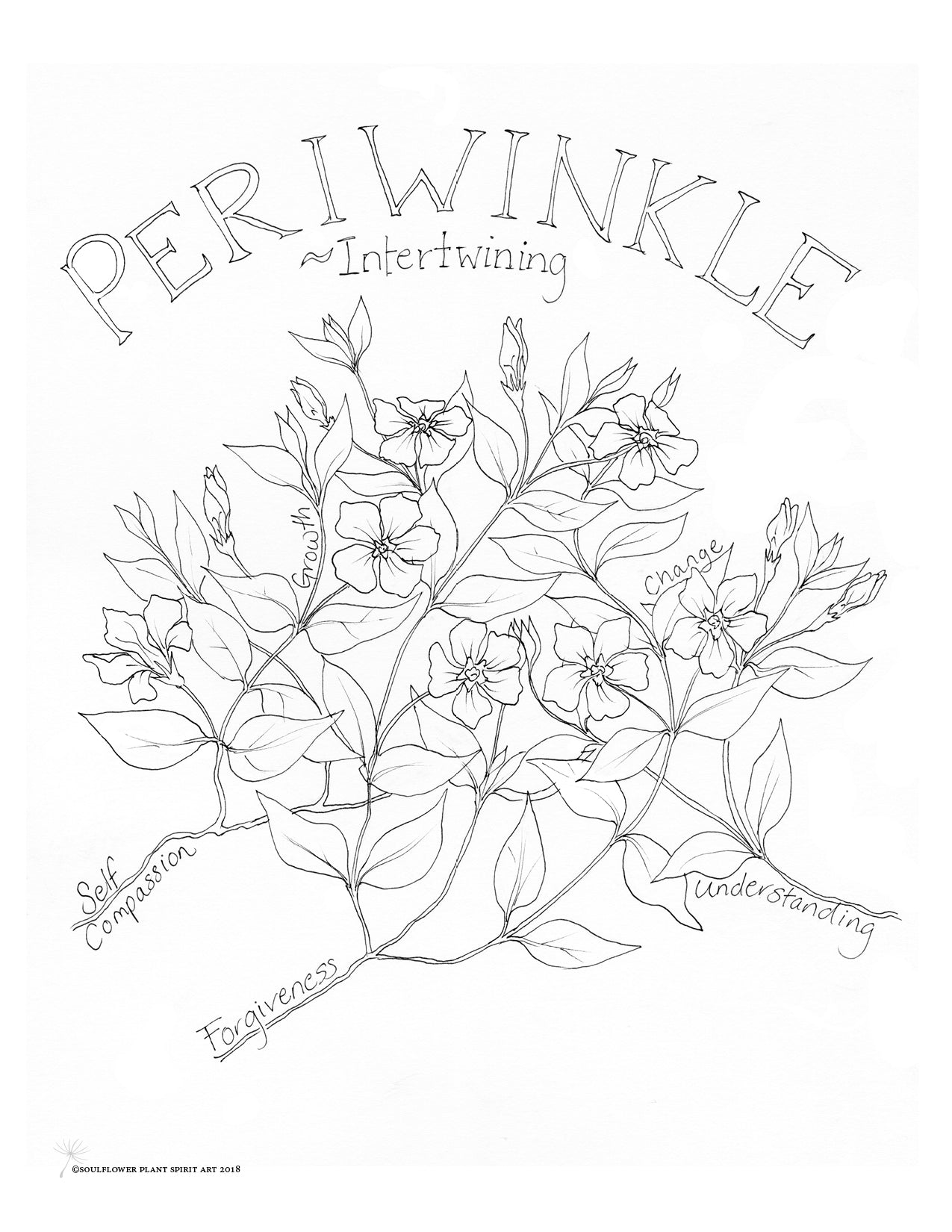 Periwinkle (Intertwining) Coloring Page - My Soulflower