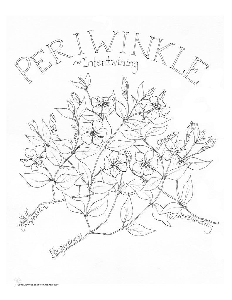 Periwinkle (Intertwining) Coloring Page