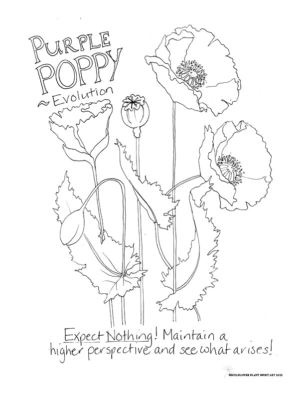 Purple Poppy (Evolution) Coloring Page