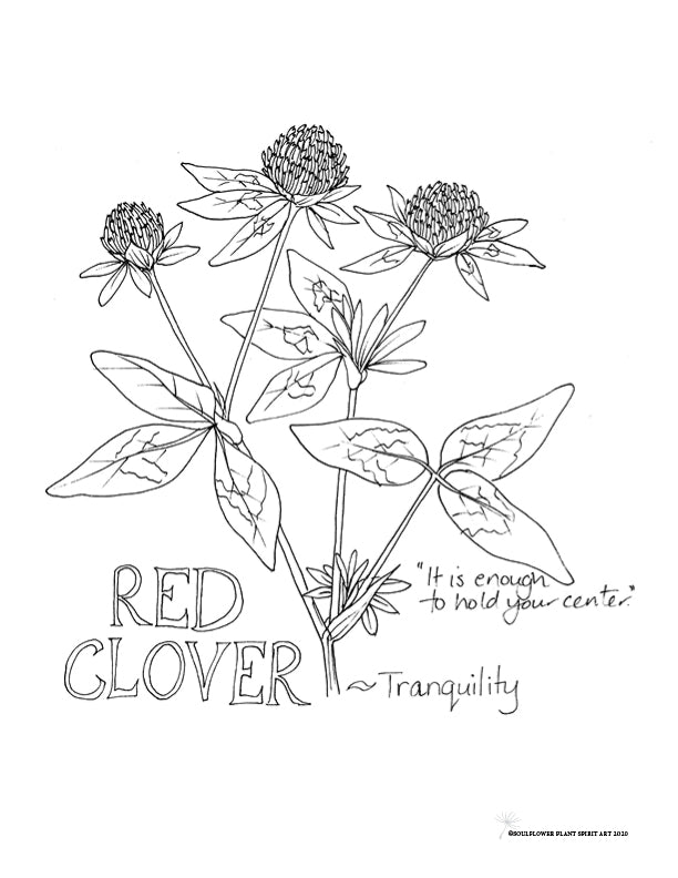 Red Clover (TRANQUILITY) Coloring Page