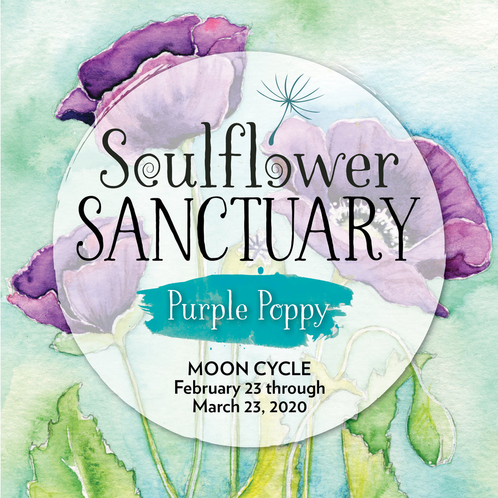 Purple Poppy (Evolution) Moon Cycle Mentorship