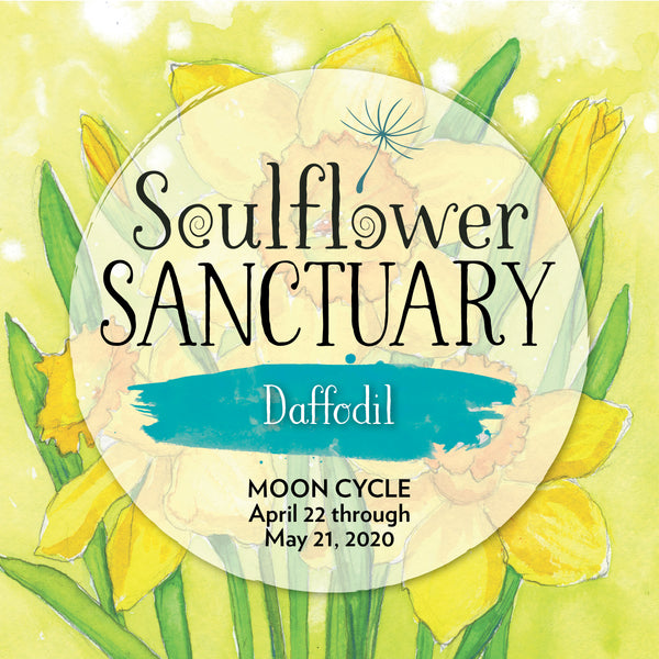 Daffodil (Perception) Moon Cycle Mentorship