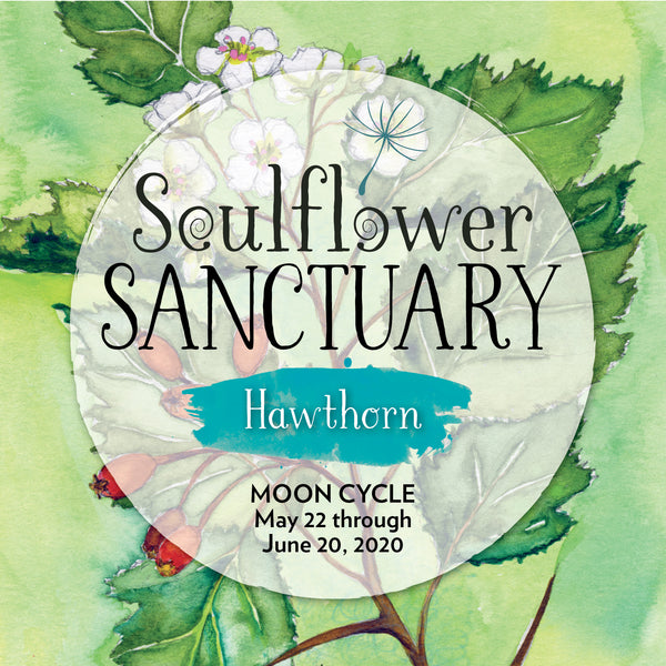 Hawthorn (Courage) Moon Cycle Mentorship