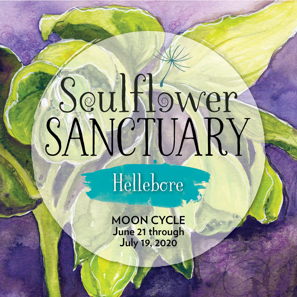 Hellebore (Empowerment) Moon Cycle Mentorship