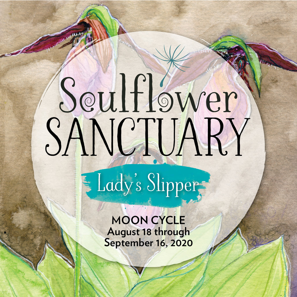 Lady's Slipper (Connection) Moon Cycle Mentorship