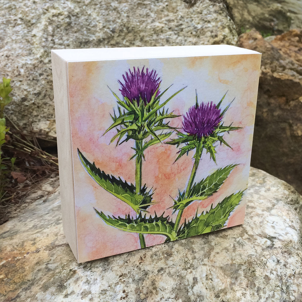 Milk Thistle (Forgiveness) Mounted Print