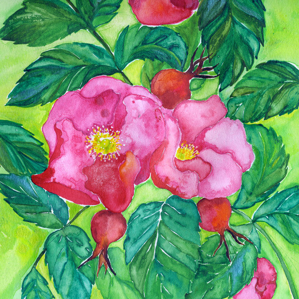 Rose (Joy) Mounted Print