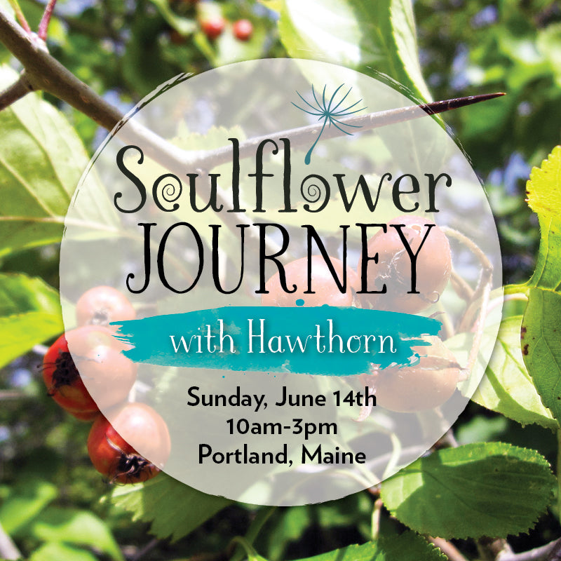 A Soulflower Journey with Hawthorn (COURAGE)