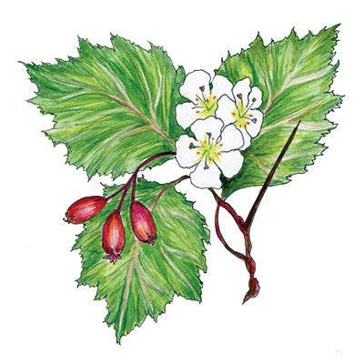 Hawthorn (Courage) Temporary Tattoo