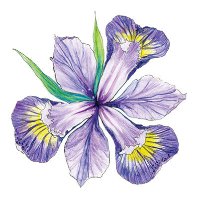 Iris (Inspiration) Temporary Tattoo