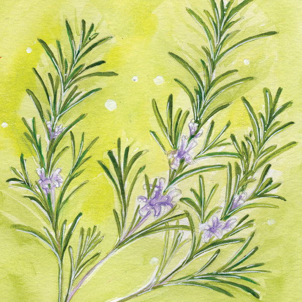 Rosemary Mounted Print