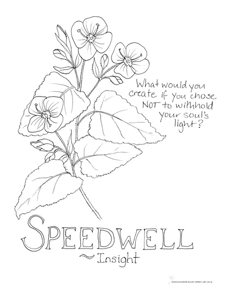 Speedwell (Insight) Coloring Page