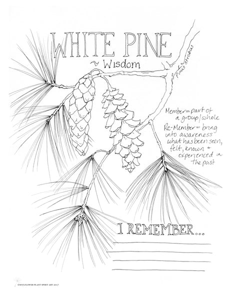 White Pine (Wisdom) Coloring Page