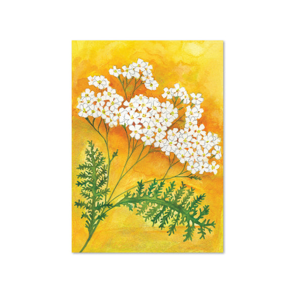 Yarrow Original Painting