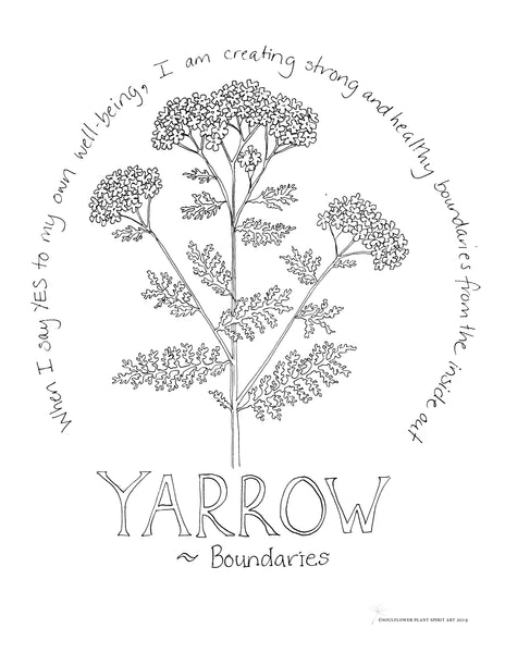 Yarrow Coloring Page