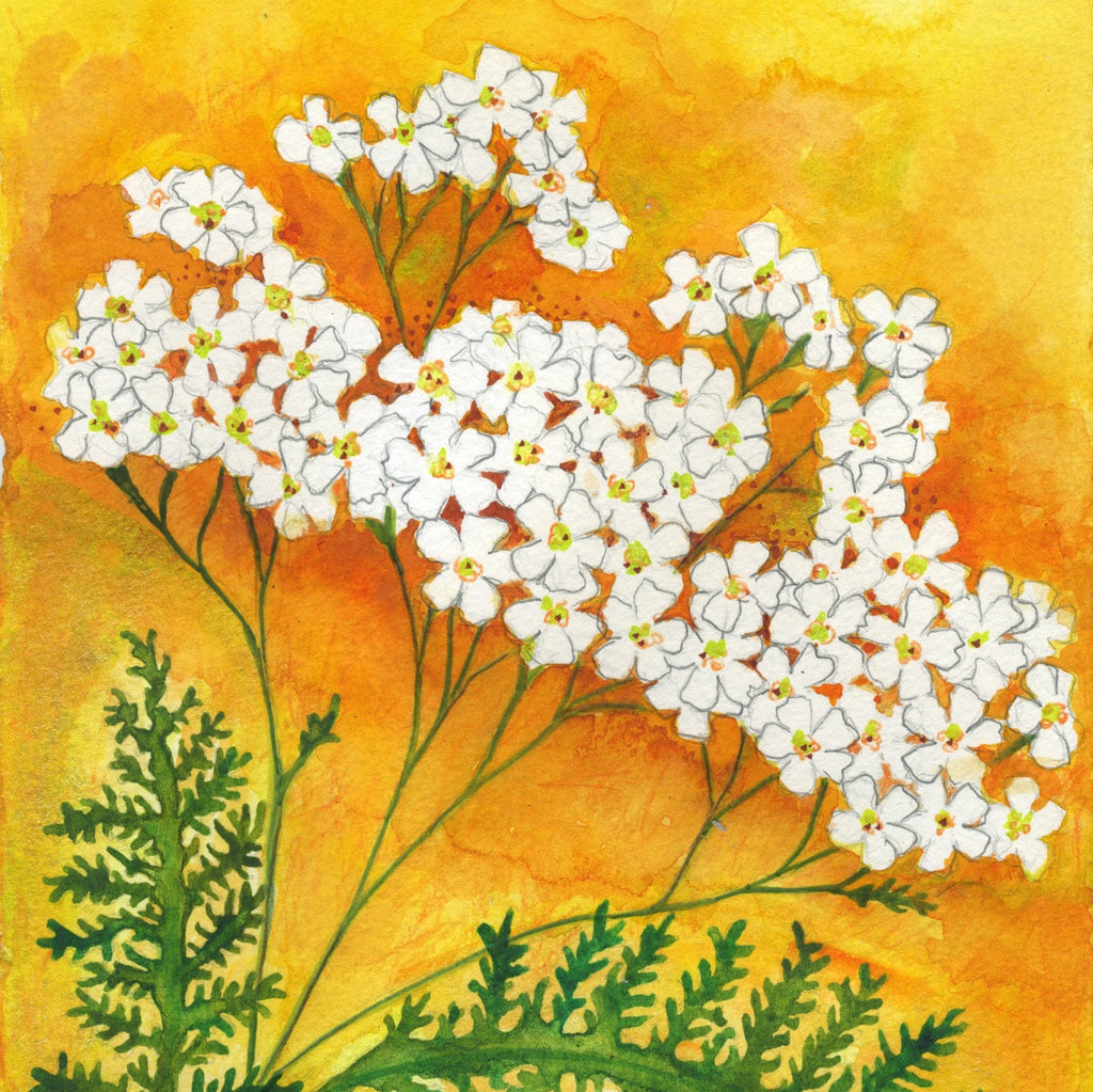 Yarrow (Boundaries) Mounted Print